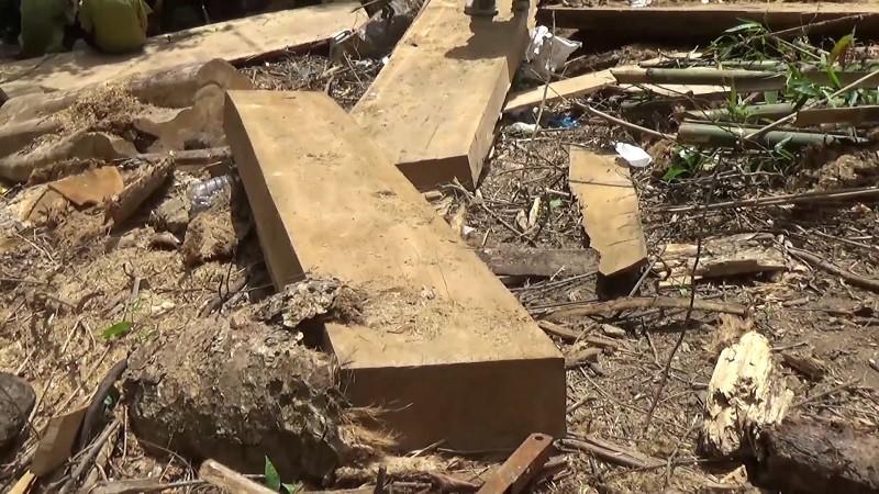 Khởi tố nhóm người tham gia phá rừng Nam Kar - ảnh 4