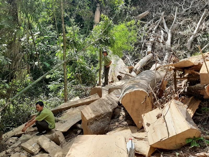 Khởi tố nhóm người tham gia phá rừng Nam Kar - ảnh 2