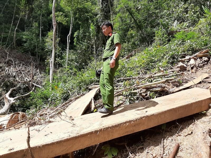 Khởi tố nhóm người tham gia phá rừng Nam Kar - ảnh 3