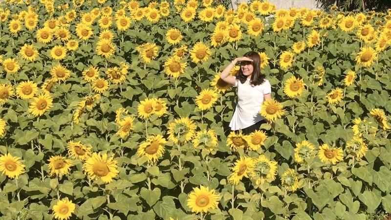 Giới trẻ rầm rộ check in vườn hoa mặt trời giữa lòng phố núi - ảnh 1