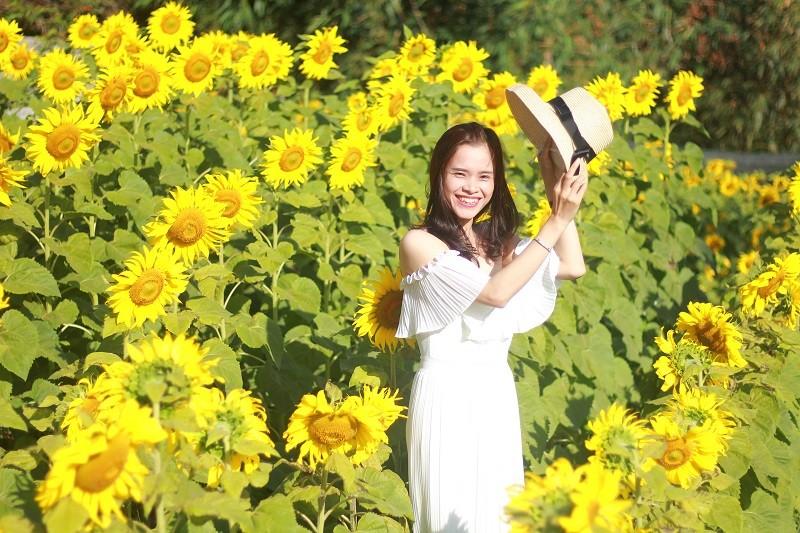 Giới trẻ rầm rộ check in vườn hoa mặt trời giữa lòng phố núi - ảnh 3