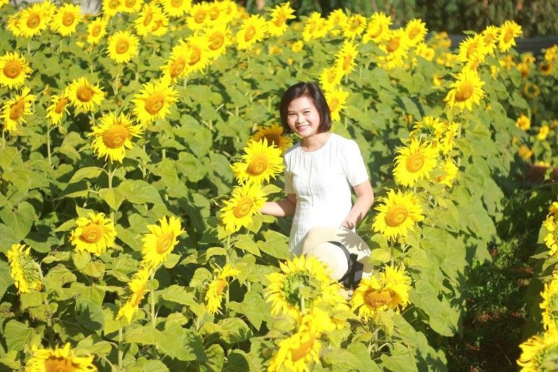 Giới trẻ rầm rộ check in vườn hoa mặt trời giữa lòng phố núi - ảnh 7