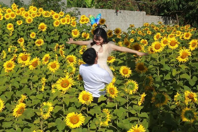 Giới trẻ rầm rộ check in vườn hoa mặt trời giữa lòng phố núi - ảnh 5
