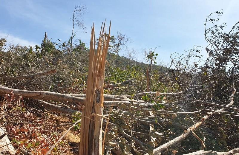 Lại phát hiện phá rừng quy mô lớn ở Đắk Lắk - ảnh 1