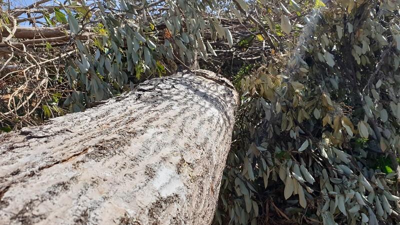 Lại phát hiện phá rừng quy mô lớn ở Đắk Lắk - ảnh 2