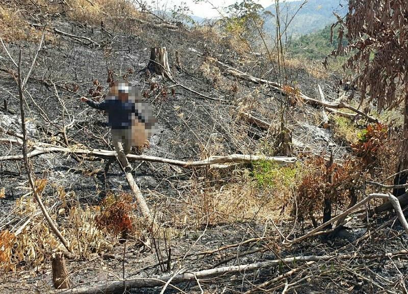 Lại phát hiện phá rừng quy mô lớn ở Đắk Lắk - ảnh 4