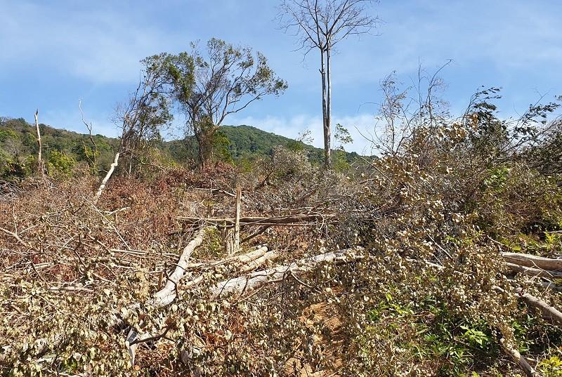 Khởi tố vụ án phá rừng tại Đắk Lắk - ảnh 2