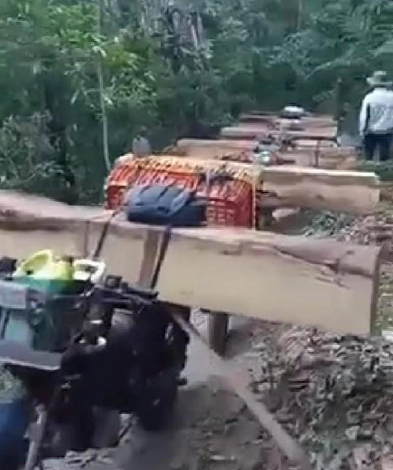 Mật phục bắt đoàn xe máy chở gỗ ra khỏi rừng - ảnh 1
