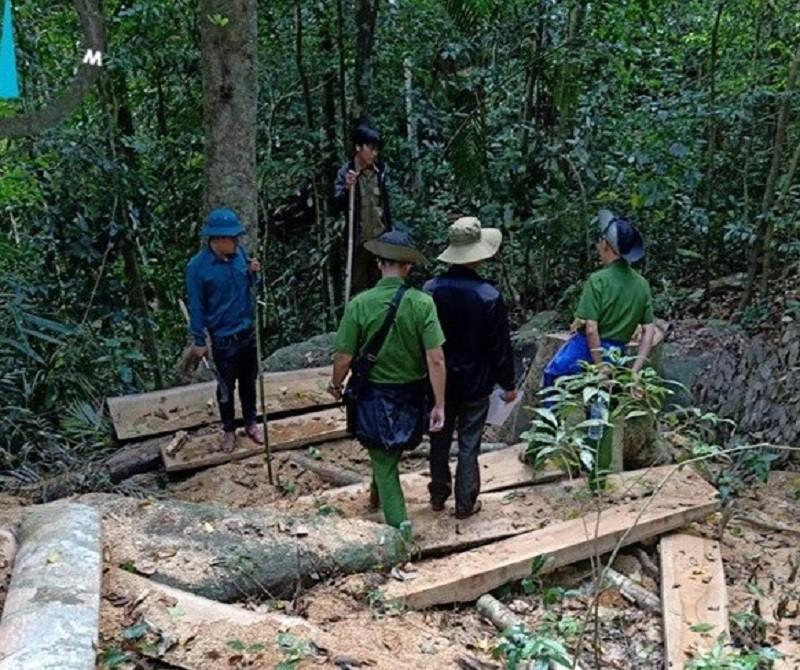 Kiểm tra hiện trường vụ phá rừng ở Gia Lai - ảnh 2