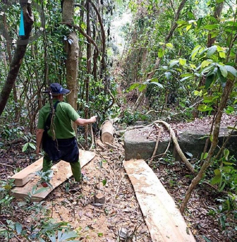 Kiểm tra hiện trường vụ phá rừng ở Gia Lai - ảnh 1