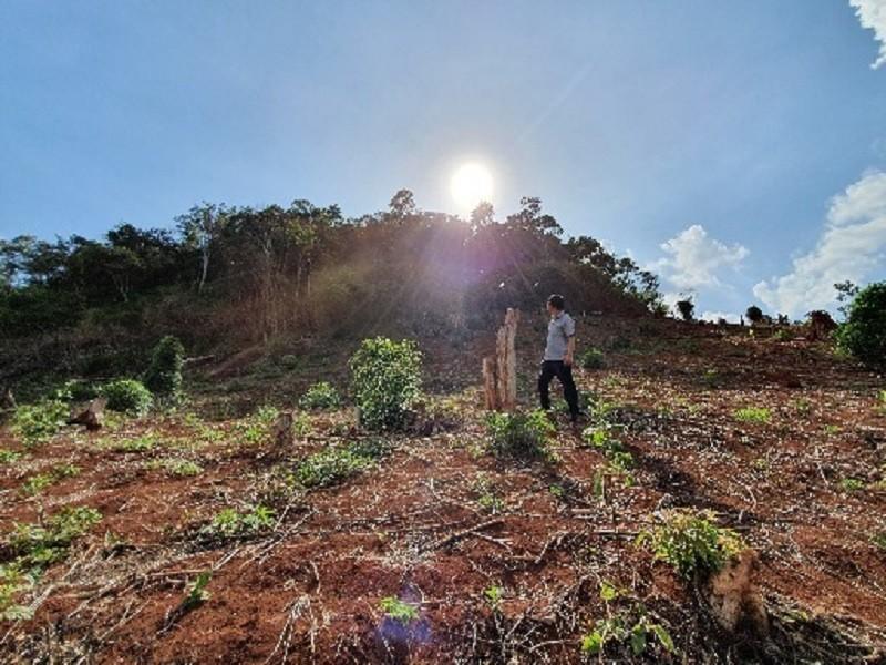 Nhận hối lộ 3 triệu, phó giám đốc hợp tác xã ở Đắk Nông bị bắt - ảnh 1