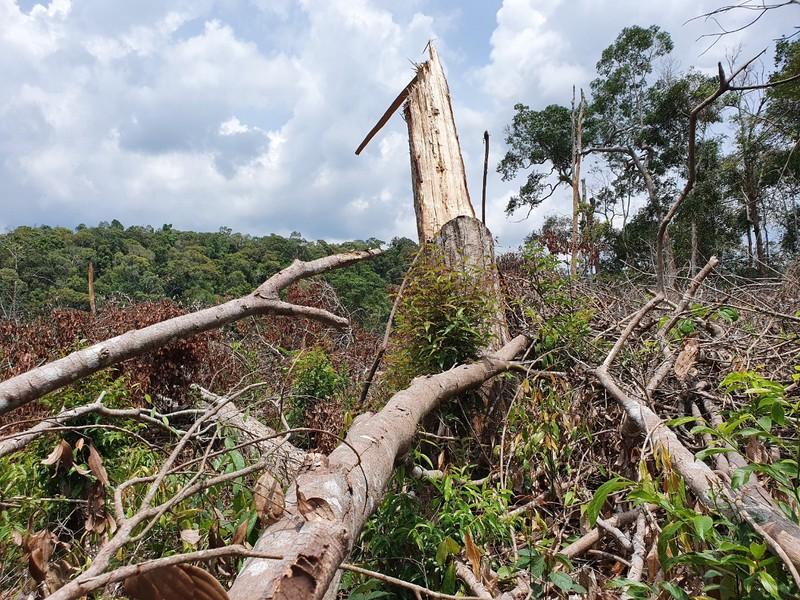 Chuyển điều tra vụ kê khống đất rừng để trục lợi tiền tỉ - ảnh 2