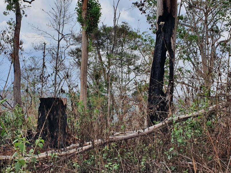 Chuyển điều tra vụ kê khống đất rừng để trục lợi tiền tỉ - ảnh 1