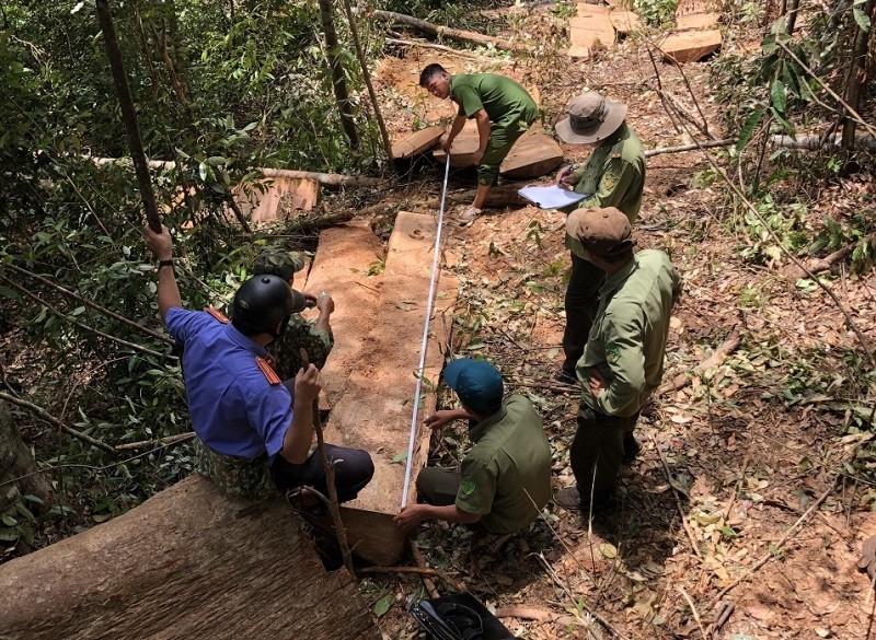 11 người phá rừng tại Đắk Nông khai do gia đình khó khăn - ảnh 1