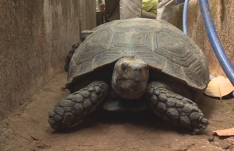 Nuôi nhốt 127 con rùa trong nhà, bị khởi tố - ảnh 1