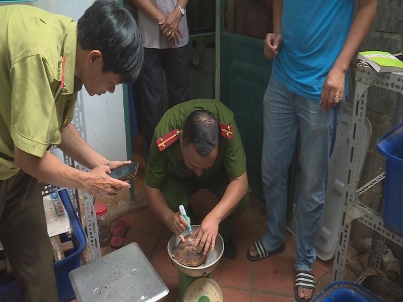Nuôi nhốt 127 con rùa trong nhà, bị khởi tố - ảnh 2