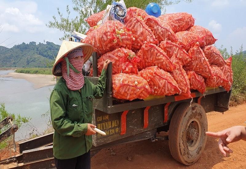 'Chuyện lạ' ở Đắk Nông: Trồng bắp toàn… cùi, không hạt - ảnh 6