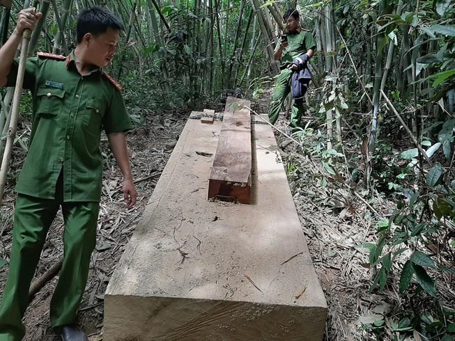 Kỷ luật cán bộ để mất rừng, làm trung gian cho vay lãi nặng  - ảnh 1
