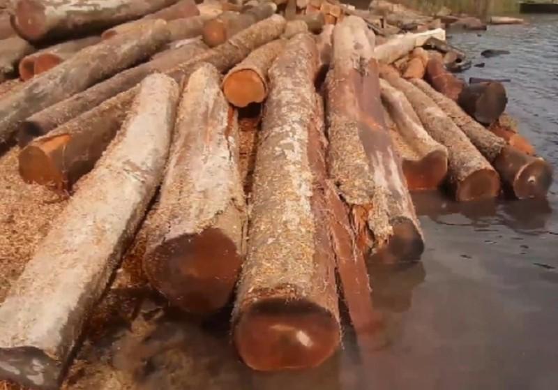 Kiểm lâm thông tin các 'bãi gỗ vô chủ' ở hồ Sê San - ảnh 2