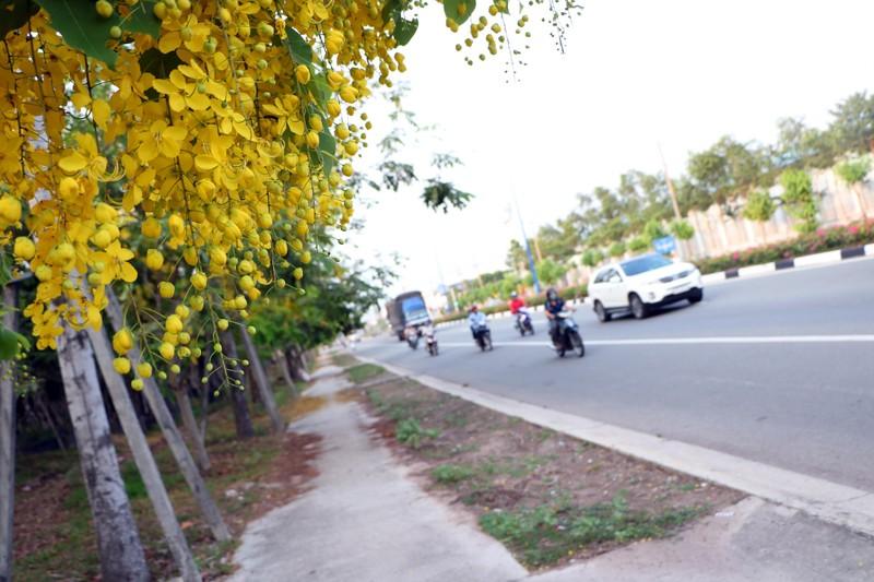 Sắc vàng quyến rũ trên những con đường ở Bình Dương - ảnh 1