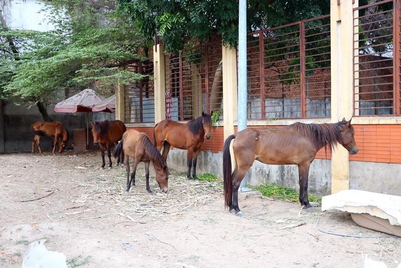 Đàn ngựa vô chủ ở Bình Dương sẽ được bán đấu giá - ảnh 1