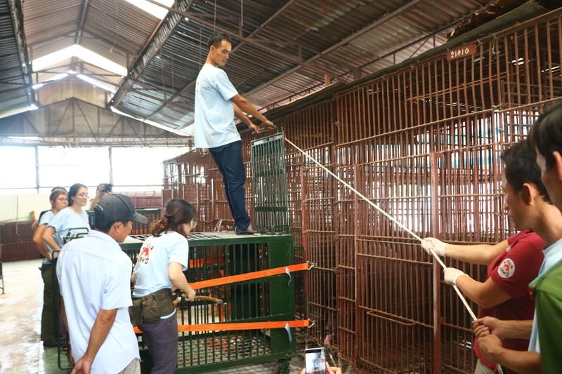 Cứu hộ bảy cá thể gấu bị nuôi nhốt ở Bình Dương, Đồng Nai - ảnh 1