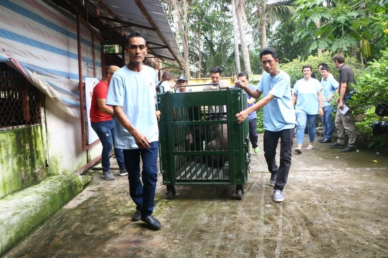 Cứu hộ bảy cá thể gấu bị nuôi nhốt ở Bình Dương, Đồng Nai - ảnh 4