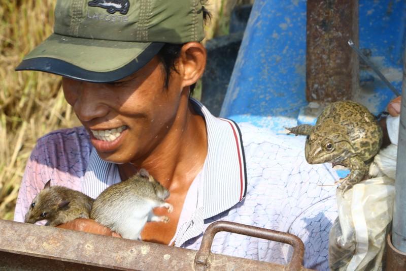 Tránh dịch COVID-19, công nhân ra đồng bắt chuột bán kiếm tiền - ảnh 11