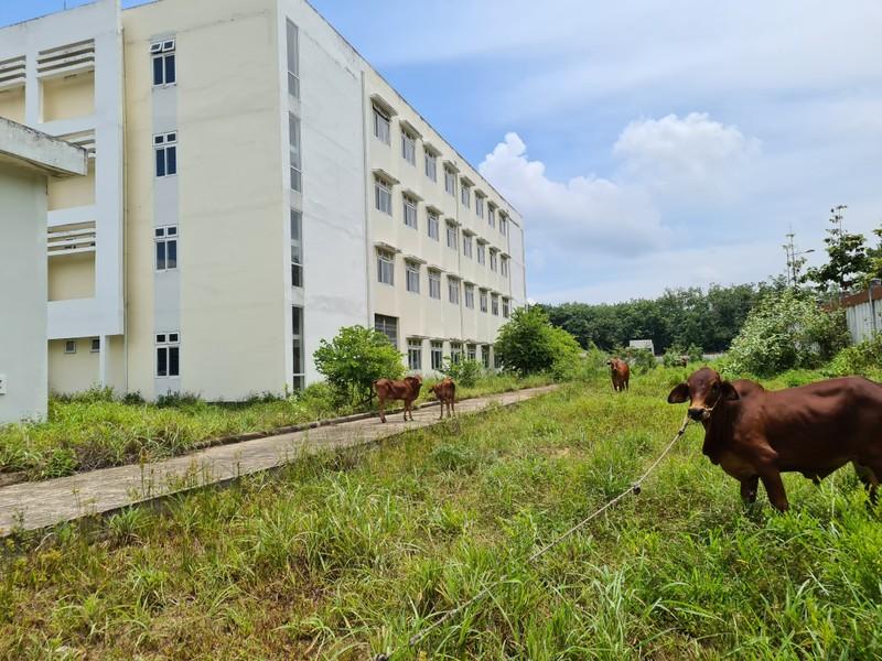 Sở Y tế Bình Dương nói về bệnh viện trăm tỉ thành nơi bò ở - ảnh 1