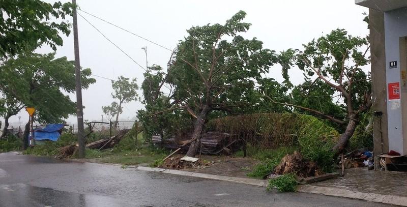 Bão số 3 áp sát, cây gãy đổ la liệt trên đường phố Đà Nẵng  - ảnh 4