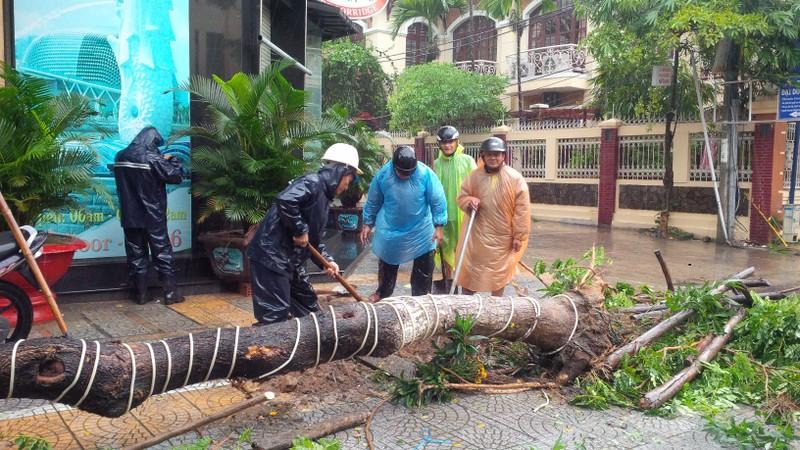 Bão số 3 áp sát, cây gãy đổ la liệt trên đường phố Đà Nẵng  - ảnh 3