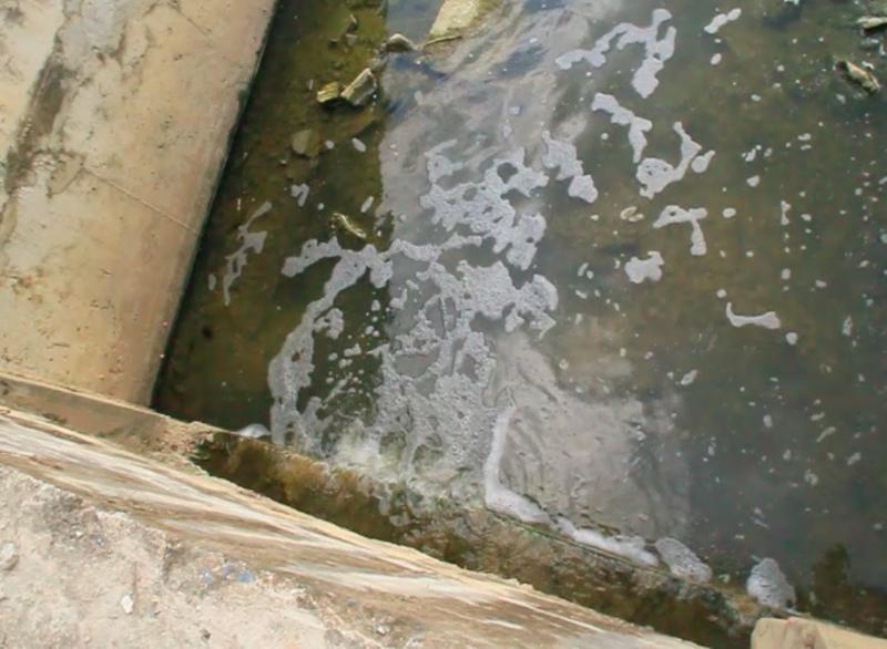 Đà Nẵng: Cá chết nổi trắng kênh Đa Cô - ảnh 3