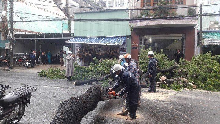Đà Nẵng: Cổng chào, cây cối gãy ngã la liệt do bão  - ảnh 11