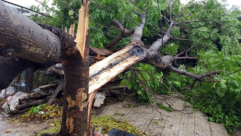 Đà Nẵng: Cổng chào, cây cối gãy ngã la liệt do bão  - ảnh 7