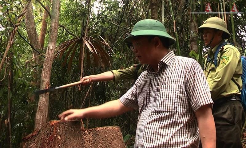 Phó chủ tịch Quảng Nam thị sát rừng Đông Giang bị phá - ảnh 4