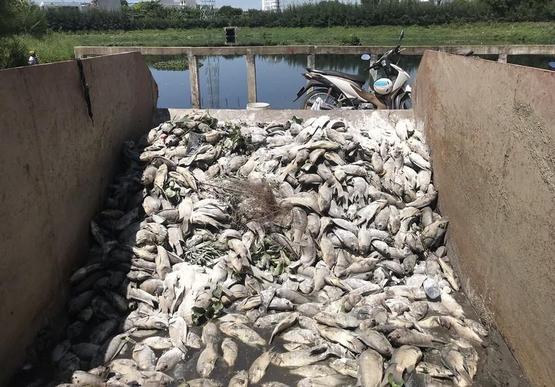 Cá chết trắng hồ ở Đà Nẵng - ảnh 2