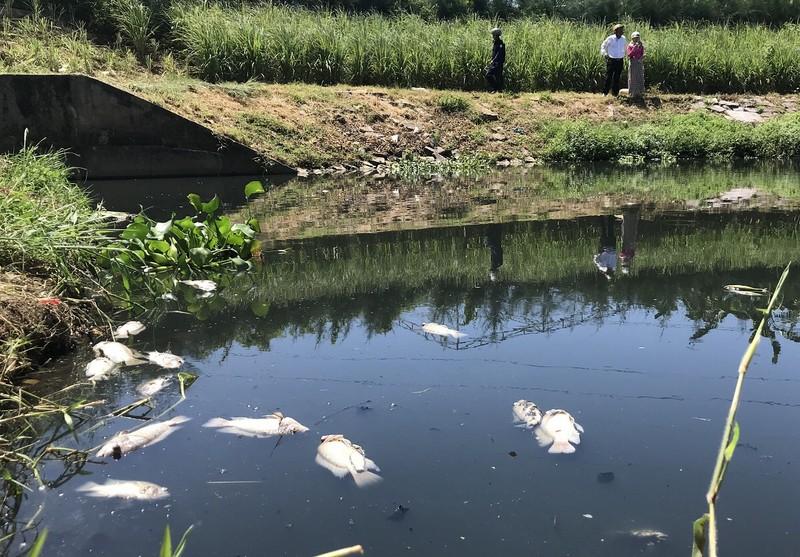 Cá chết trắng hồ ở Đà Nẵng - ảnh 1
