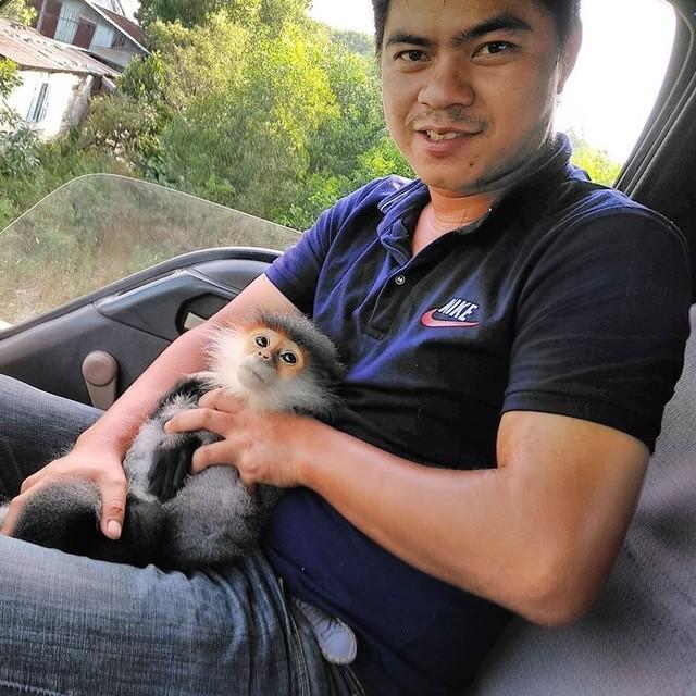 Voọc chà vá trèo vào cao tốc Đà Nẵng-Quảng Ngãi - ảnh 1