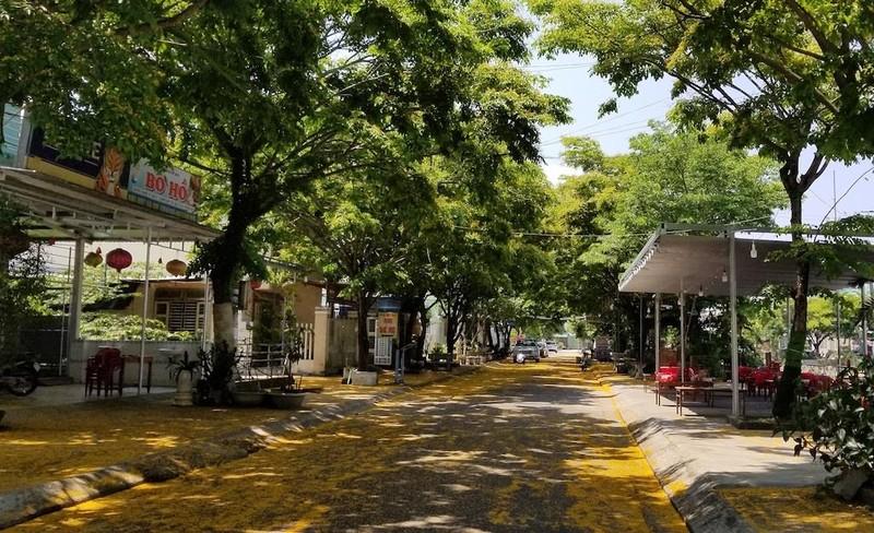 Mê mẩn ngắm hoa sưa nhuộm vàng phố phường Quảng Nam - ảnh 1