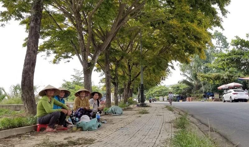 Mê mẩn ngắm hoa sưa nhuộm vàng phố phường Quảng Nam - ảnh 3