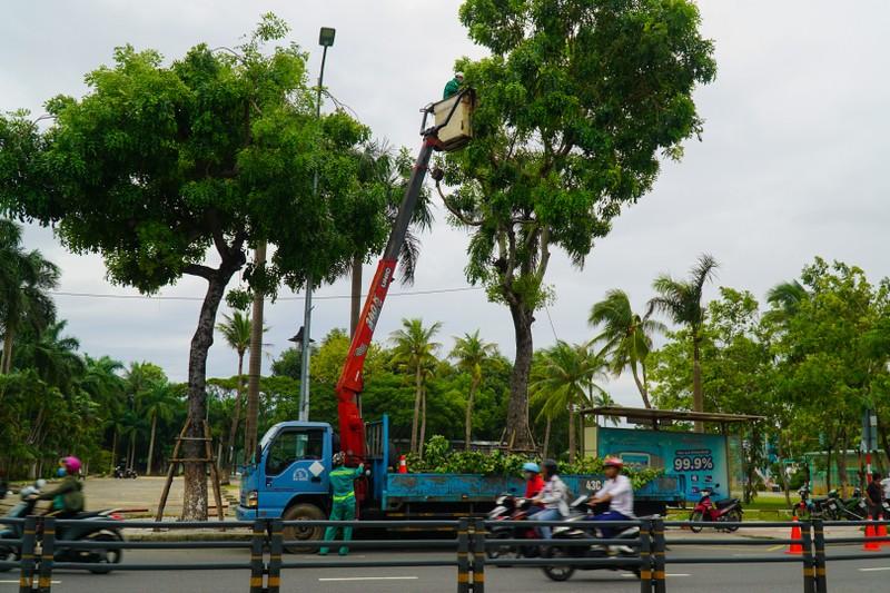 Khách sạn ở Đà Nẵng thuê container về chống bão số 9 - ảnh 5