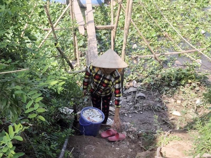 Hàng chục tấn cá nuôi bè trên sông Cái Vừng chết đột ngột - ảnh 1