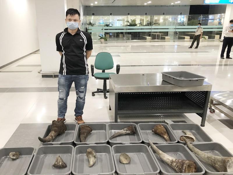 Mang 11 sừng tê giác từ Hàn Quốc về Việt Nam - ảnh 1