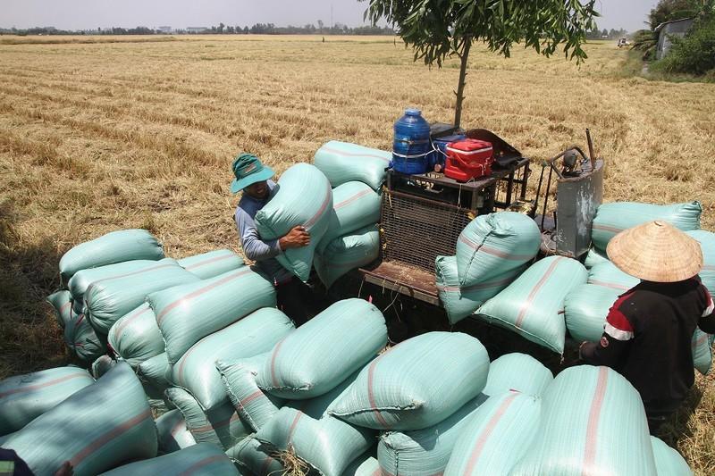 An Giang kiến nghị Thủ tướng cho tiếp tục xuất khẩu gạo - ảnh 1