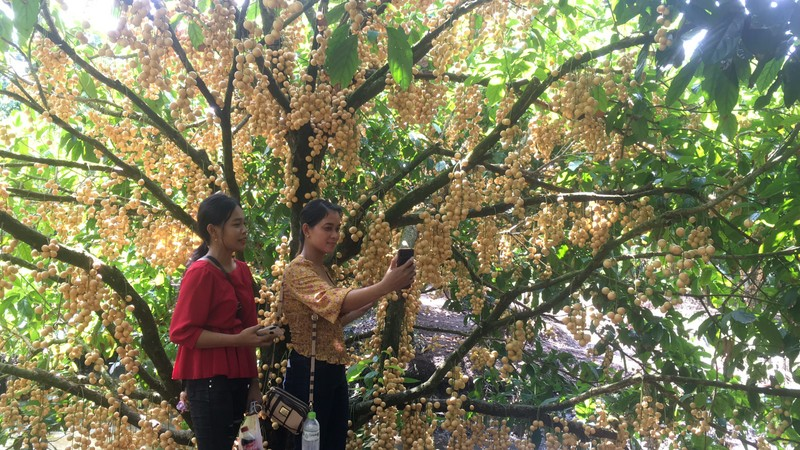 Thoải mái 'check-in' trong vườn dâu rộng 5 ha ở miền Tây - ảnh 10