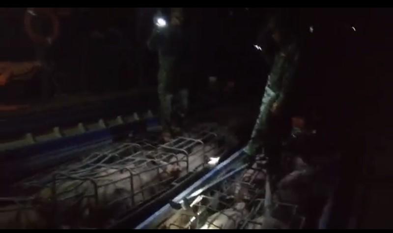 Bắt 6 tấn heo từ Campuchia nhập lậu vào Việt Nam - ảnh 1