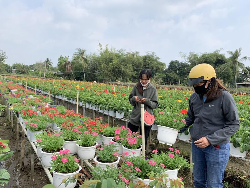 Làng hoa Sa Đéc: Hàng triệu giỏ hoa chuẩn bị ra chợ Tết - ảnh 8