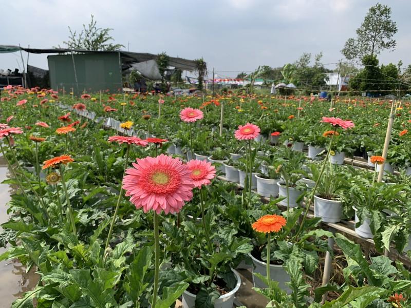 Làng hoa Sa Đéc: Hàng triệu giỏ hoa chuẩn bị ra chợ Tết - ảnh 9