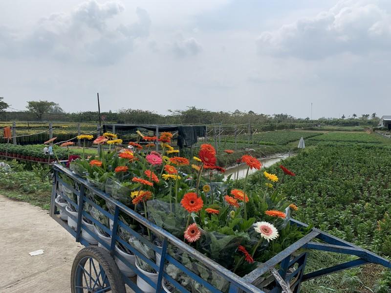 Làng hoa Sa Đéc: Hàng triệu giỏ hoa chuẩn bị ra chợ Tết - ảnh 10