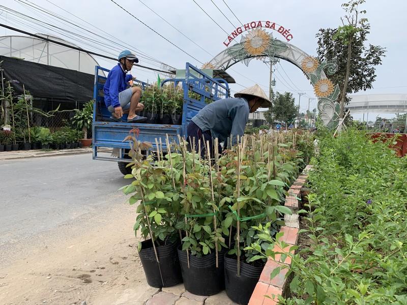 Làng hoa Sa Đéc: Hàng triệu giỏ hoa chuẩn bị ra chợ Tết - ảnh 5